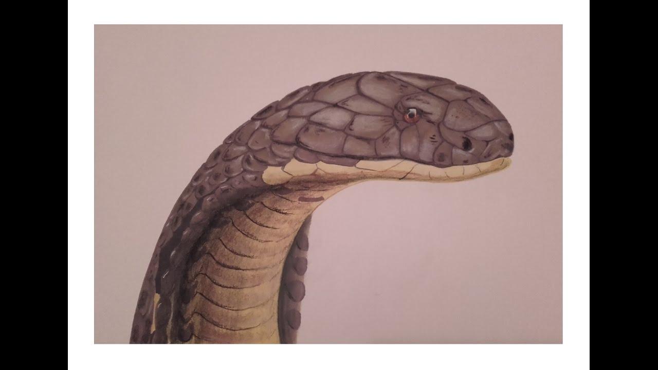 Dessiner Un Serpent Cobra Réaliste Promarker Et Pastel Sec Speed Drawing