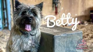 Betty | Cairn Terrier | 2yrs old | Best Trained Dogs of OR | Portland OffLeash K9 Training