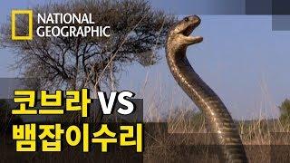 맹독을 지닌 뱀과 놀라운 힘을 가진 새의 맞대결!