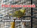 Burung Pleci Materi Mewah Cocok Buat Masteran Pleci Bahan  Mp3 - Mp4 Download