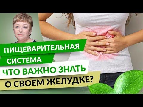 0 Пищеварительная система. Что важно знать о своем желудке?