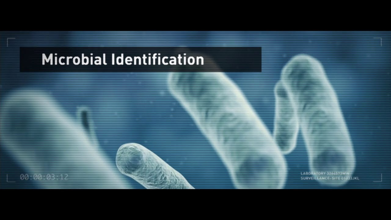Microbial Identification: Bacterial and Fungal ID using MicroSEQ® System