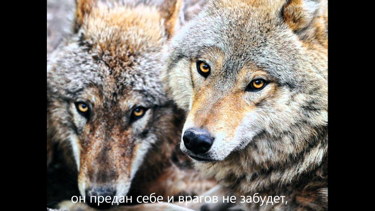 Звук волков скачать