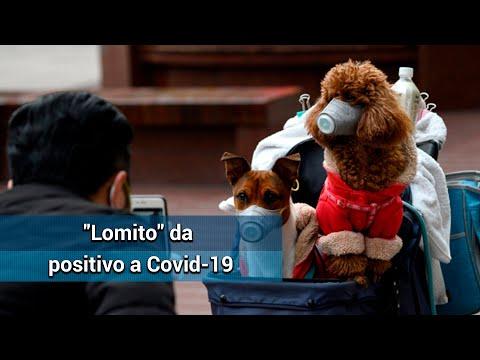 Detectan Primer Caso De Coronavirus En Un Perro