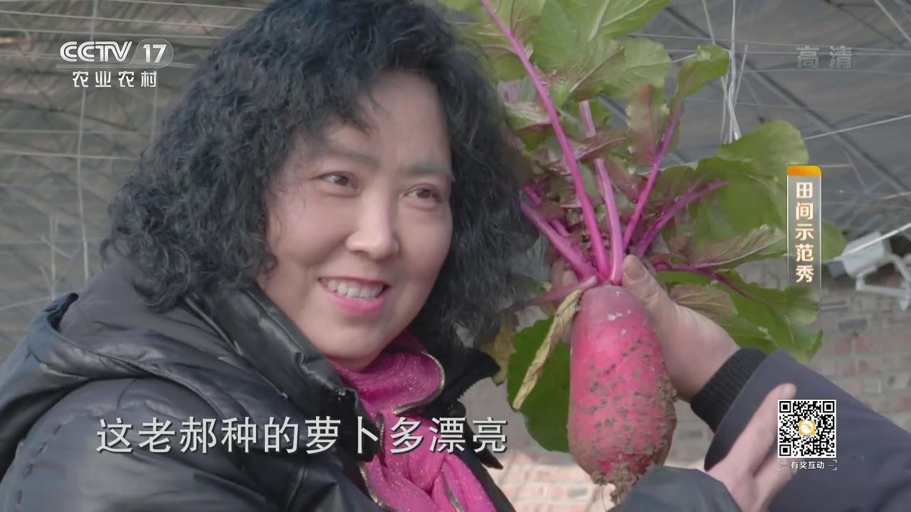 《田間示范秀》 20200104 鳳梨蘿卜變身記 CCTV農業 - YouTube