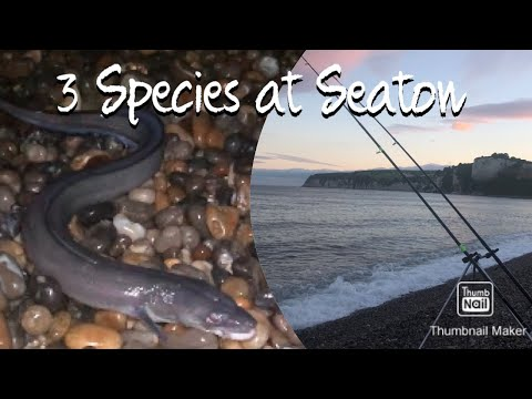 Sea Fishing SEATON BEACH At Night. Devon Coastline UK Angling. 3 SPECIES CAUGHT Mackerel Conger