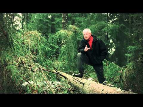 Moelven Skog
