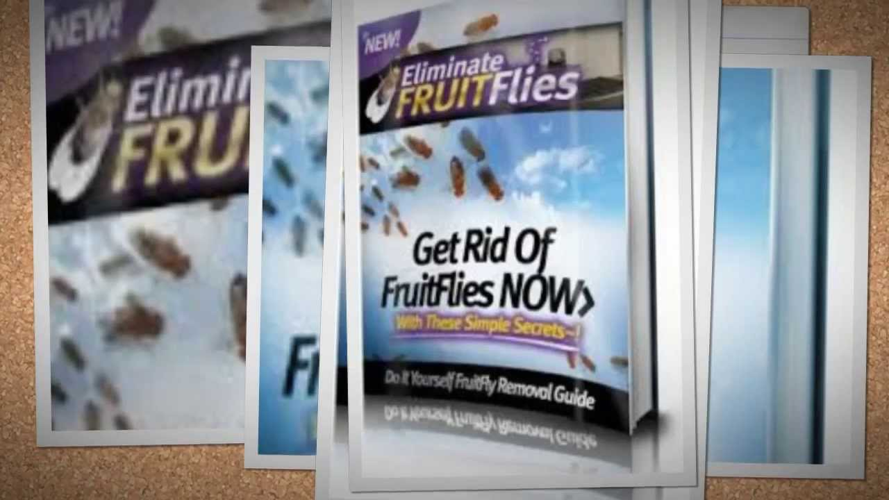 How To Kill Fruit Flies Fast - Best Fruit Flies Home Remedy - YouTube