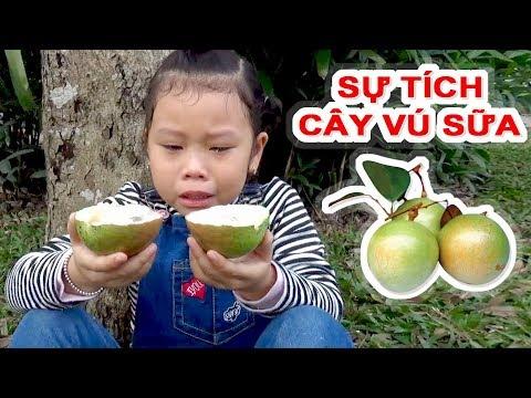 Truyện Dân Gian -- Sự Tích Cây Vú Sữa ❤ Susi kids TV ❤