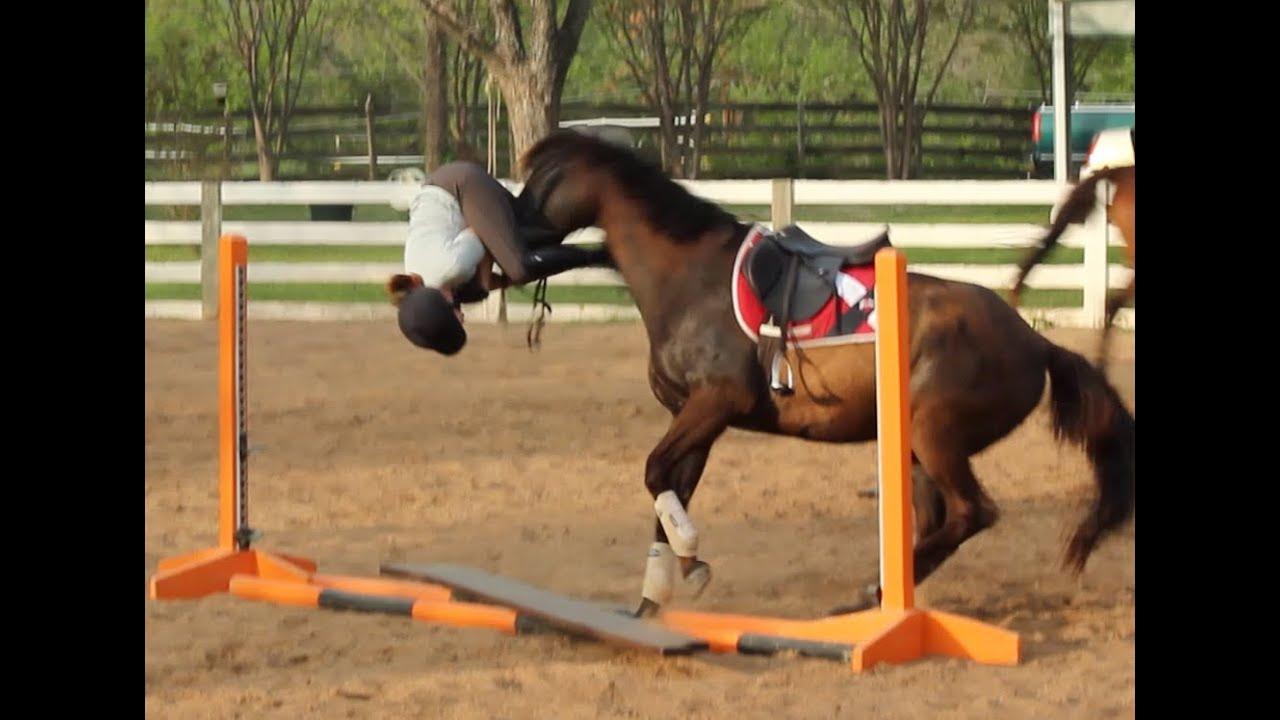 funny horse fails - 1028×747