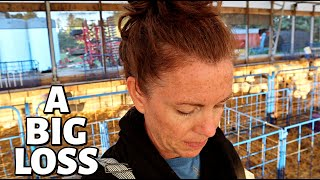 I was too late.  (DELIVERING STILLBORN LAMBS) Vlog 317
