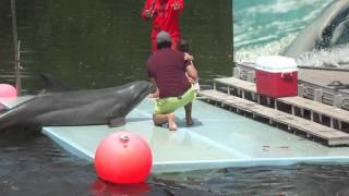 Fotographieren mit Delfin Varadero 2016 Kuba Video 2
