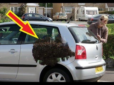 Женщина чуть не впала в СТУПОР от увиденного! НЕЧТО шевелилось на её авто!