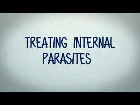 How To Treat Internal Parasites In Your Aquarium
