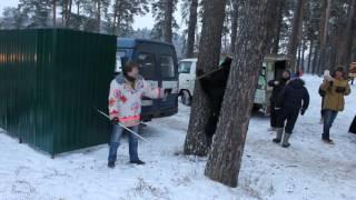 Медведь в Подмосковье.