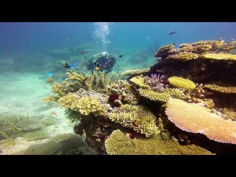 2013 Fiji Rainbow Reef