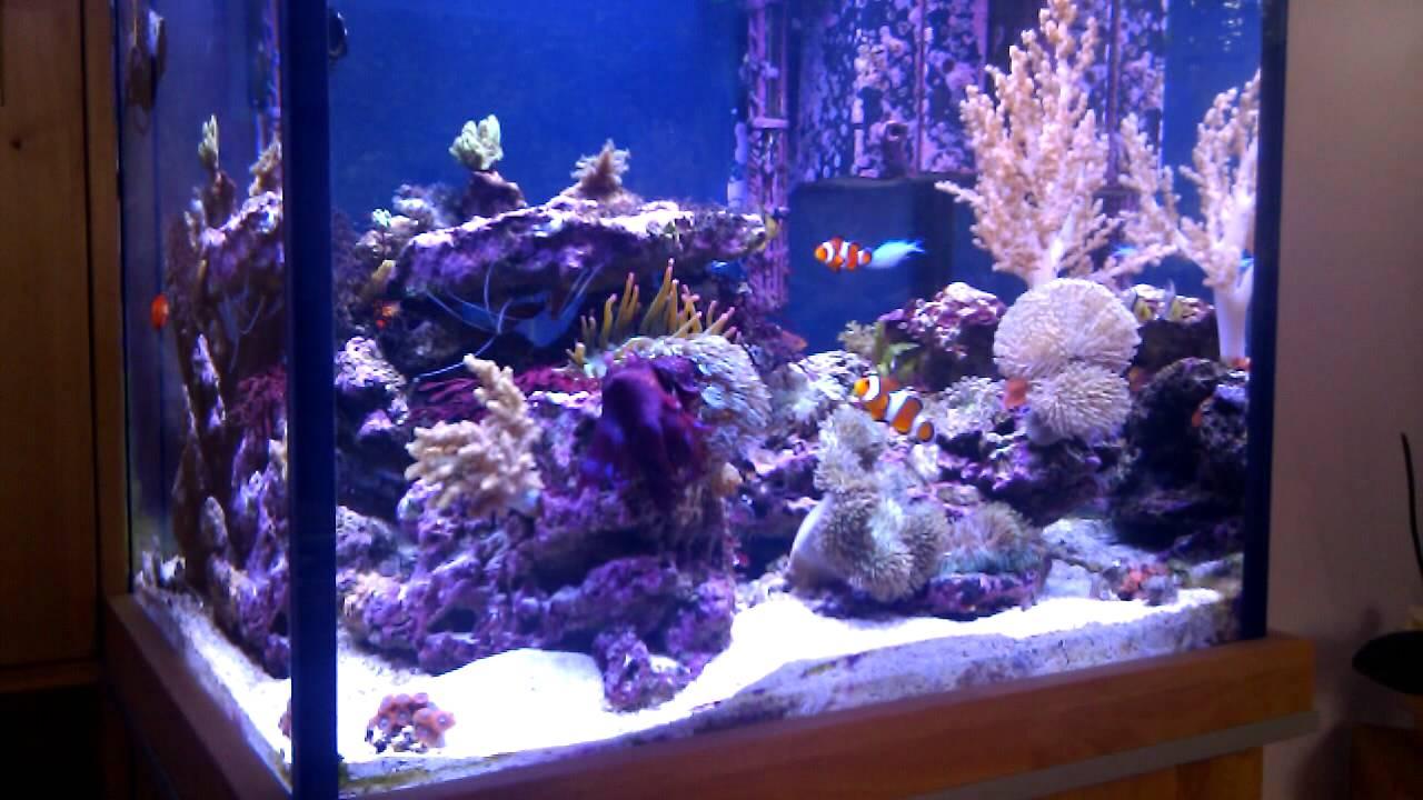 Meerwasser Aquarium 180l Netto Youtube