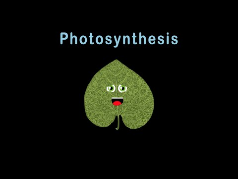 Leaf Song/Photosynthesis/Photosynthesis for Kids