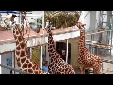 Blackpool Zoo 2015