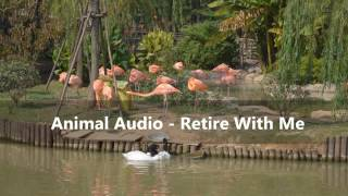 Animal Audio - Retire With Me (PNG Music)