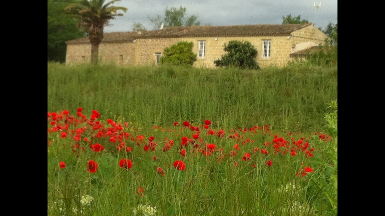 Maison de caract¨re   vendre Aigues Mortes Languedoc Roussillon