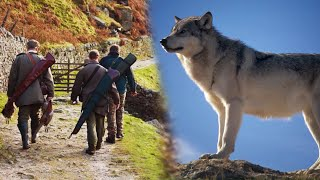 Risking his life, a wolf brought the hunter to his she wolf as she needed help