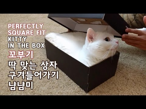 Thumbnail for Cat Video Munchkin Cat in Box
