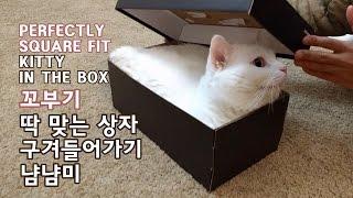 딱 맞는 상자 들어가는 꼬부기 냠냠미 CAT GETS …