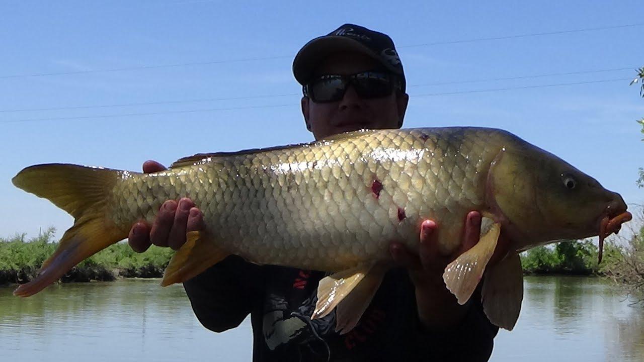 your backyard fish u0027n videos