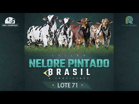 LOTE 71