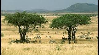Африка географическое положение. География 7 класс