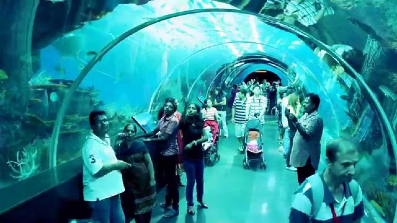 Aquarium fish tank singapore - Amazing Aquarium Tunnel In Singapore Of Asia