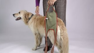 Fitting Instruction for Piccobello Dog Diapers for Large Female Dogs