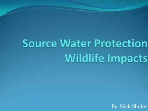Source Water Protection - Wildlife Impacts