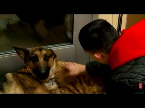Hero Dog Takes Bullets During Home Invasion - Crime Watch Daily with Chris Hansen