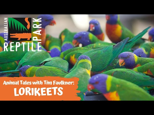 ANIMAL TALES WITH TIM FAULKNER | EPISODE FOUR | RAINBOW LORIKEETS & BACKYARD BIRDS