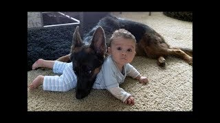 Dogs Protects Babies and Kids Compilation 2018 - The best Protection Dogs