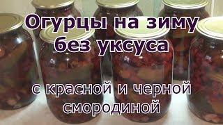 Огурцы с красной и черной смородиной на зиму без уксуса
