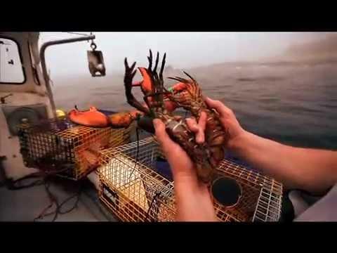 "get-maine-lobster-with-""big-baby-glen-davis"""