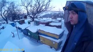 Осмотр зимовника, состояние семей на 24.01.18.