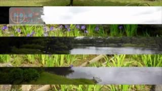 和歌の浦チャンネル 養翠園