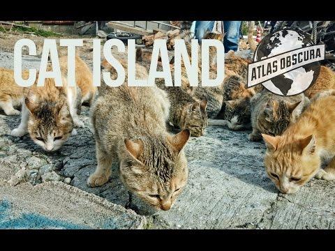 The Cat Islands of Japan   100 Wonders   Atlas Obscura
