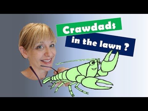 Finding Crawdads Living Inside Lawn