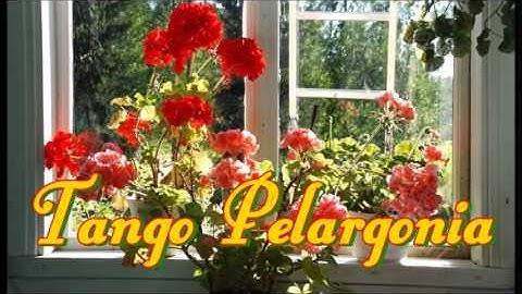Tango Pelargonia  -  Kaija Pohjola
