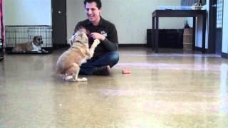 K9sonly - Dog Training Los Angeles