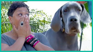 Great Dane Helps Woman Overcome Her Fear of Dogs | Lucky Dog