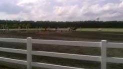 Riderless horse at the Jacksonville FL Equestrian Ctr