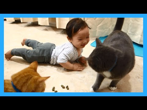 Baby Laughing at Cats!