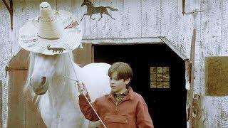 【穷电影】小男孩养了一只马,却总给它戴帽子,只因马头上的东西不能被发现
