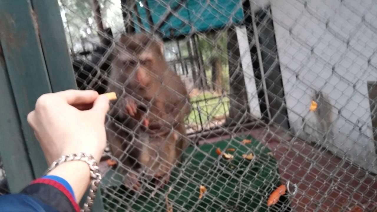 Khỉ mẹ và khỉ con mới sinh trong vườn thú